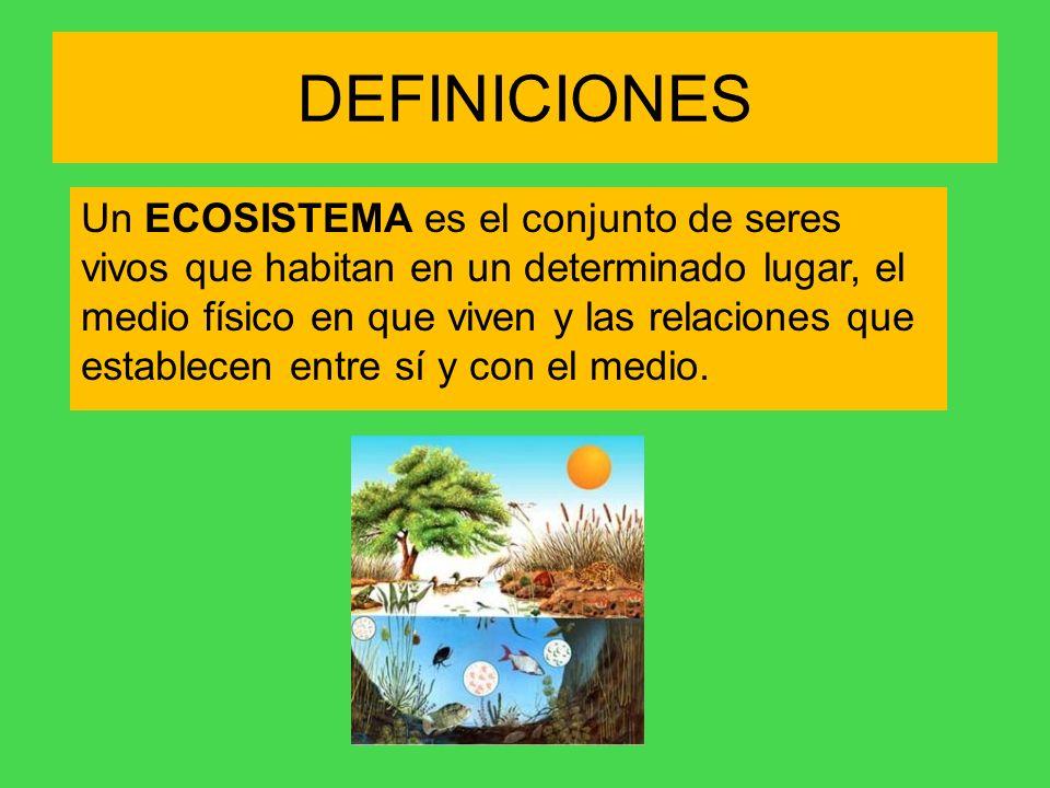 DEFINICIONES Un ECOSISTEMA es el conjunto de seres vivos que habitan en un determinado lugar, el medio físico en que viven y las relaciones que establ