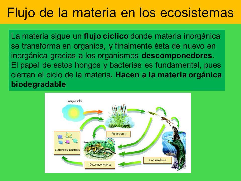 Flujo de la materia en los ecosistemas La materia sigue un flujo cíclico donde materia inorgánica se transforma en orgánica, y finalmente ésta de nuev