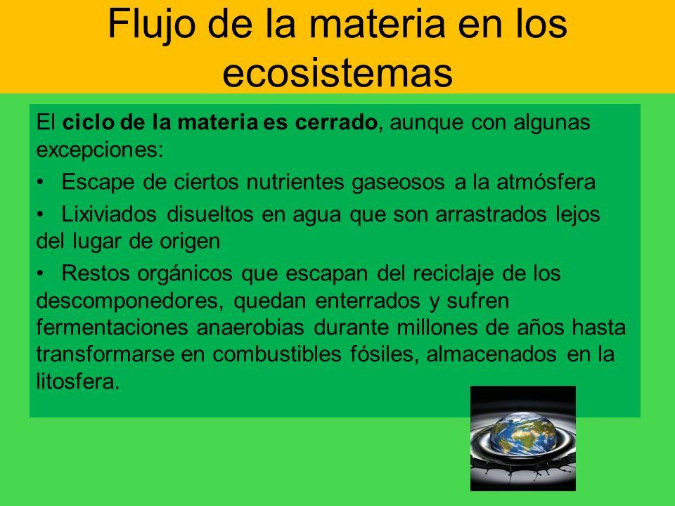 Flujo de la materia en los ecosistemas El ciclo de la materia es cerrado, aunque con algunas excepciones: Escape de ciertos nutrientes gaseosos a la a