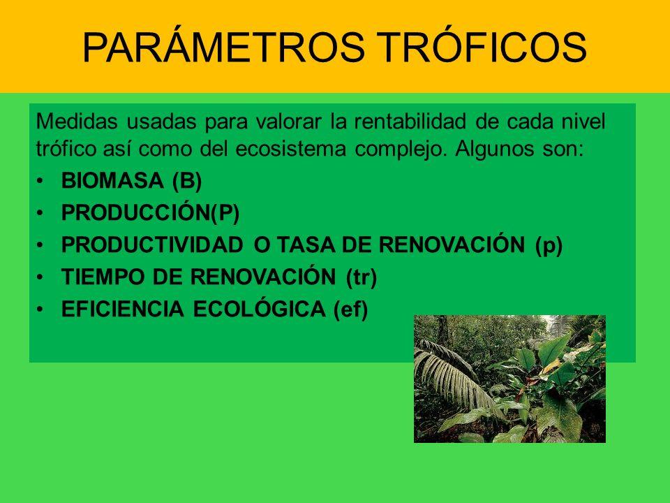 PARÁMETROS TRÓFICOS Medidas usadas para valorar la rentabilidad de cada nivel trófico así como del ecosistema complejo. Algunos son: BIOMASA (B) PRODU