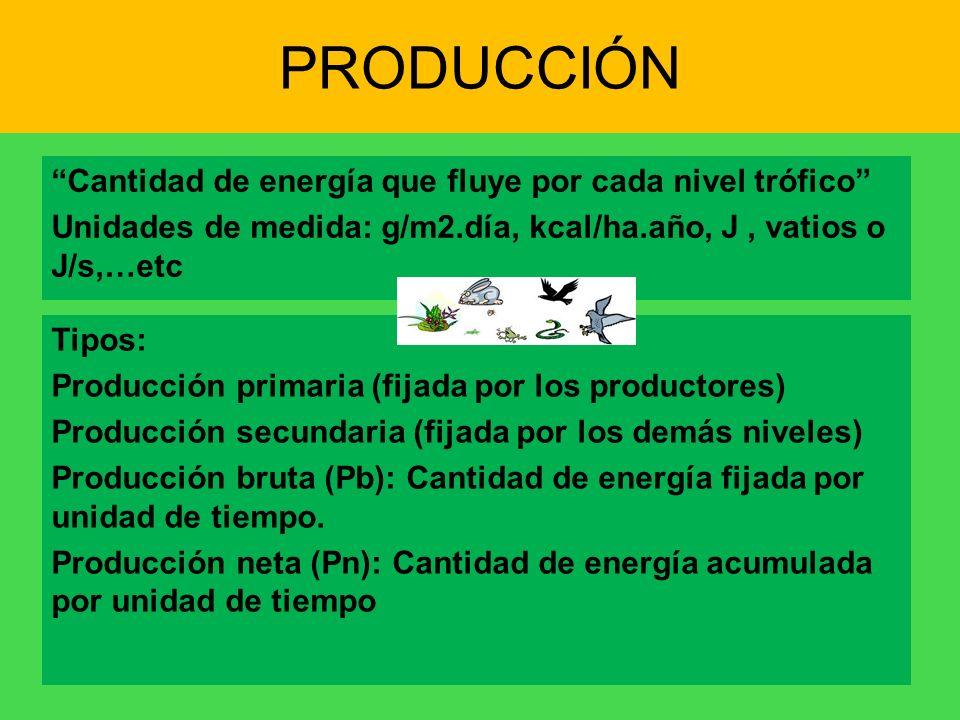 PRODUCCIÓN Cantidad de energía que fluye por cada nivel trófico Unidades de medida: g/m2.día, kcal/ha.año, J, vatios o J/s,…etc Tipos: Producción prim