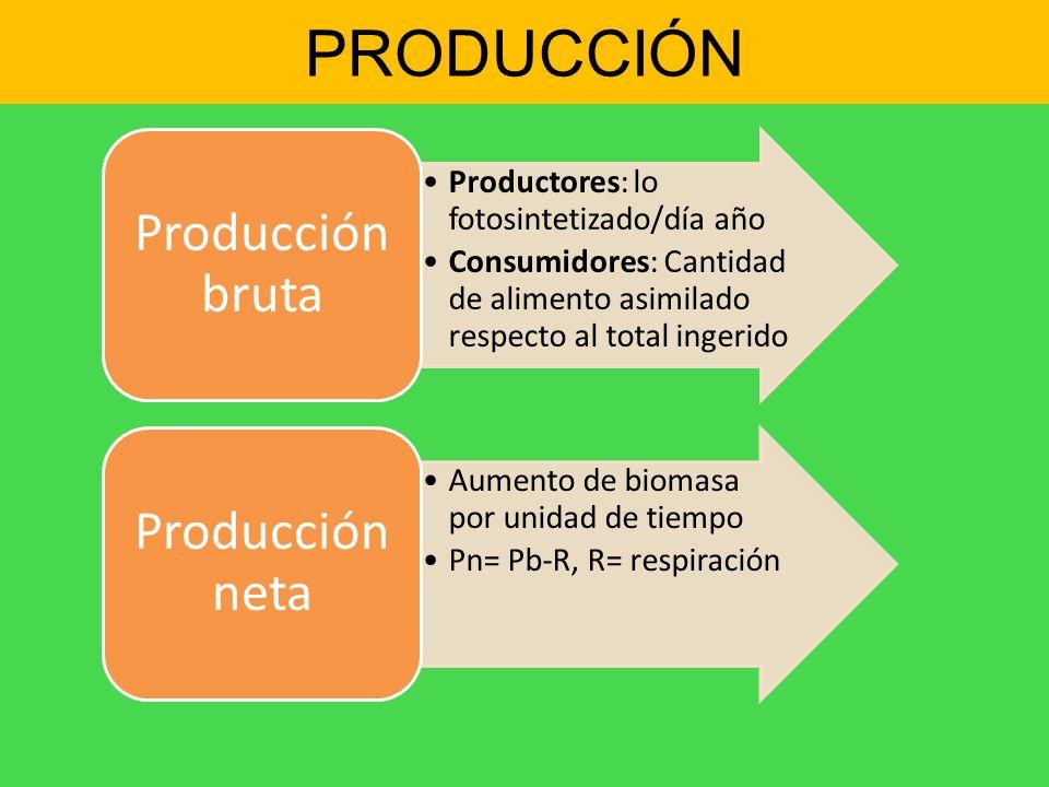 PRODUCCIÓN Productores: lo fotosintetizado/día año Consumidores: Cantidad de alimento asimilado respecto al total ingerido Producción bruta Aumento de