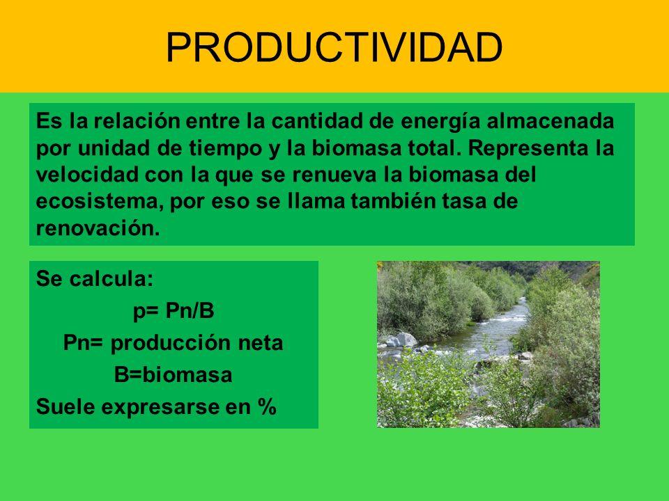 PRODUCTIVIDAD Es la relación entre la cantidad de energía almacenada por unidad de tiempo y la biomasa total. Representa la velocidad con la que se re