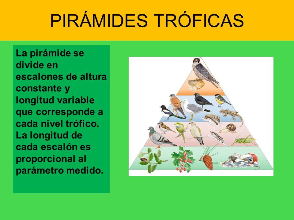PIRÁMIDES TRÓFICAS La pirámide se divide en escalones de altura constante y longitud variable que corresponde a cada nivel trófico. La longitud de cad