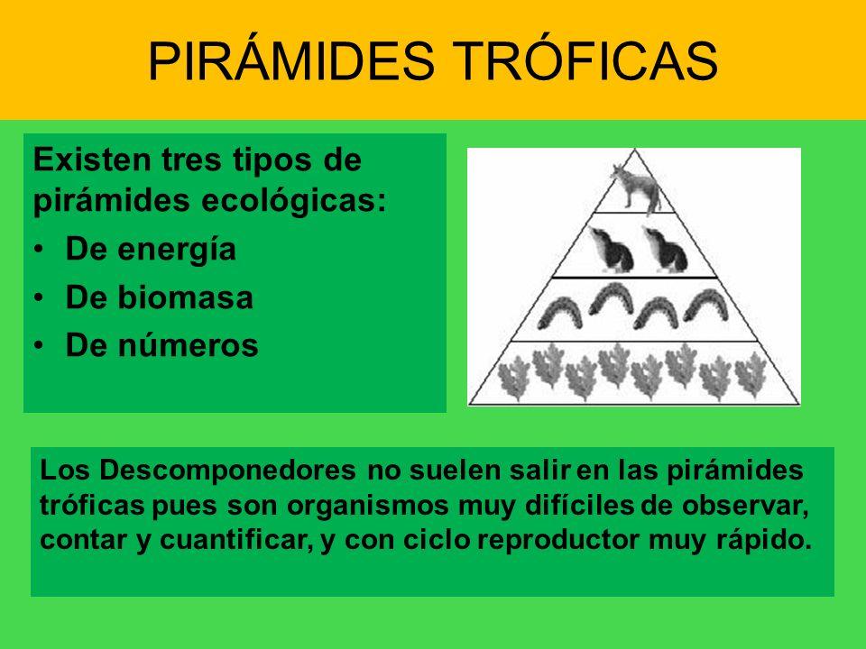 PIRÁMIDES TRÓFICAS Existen tres tipos de pirámides ecológicas: De energía De biomasa De números Los Descomponedores no suelen salir en las pirámides t