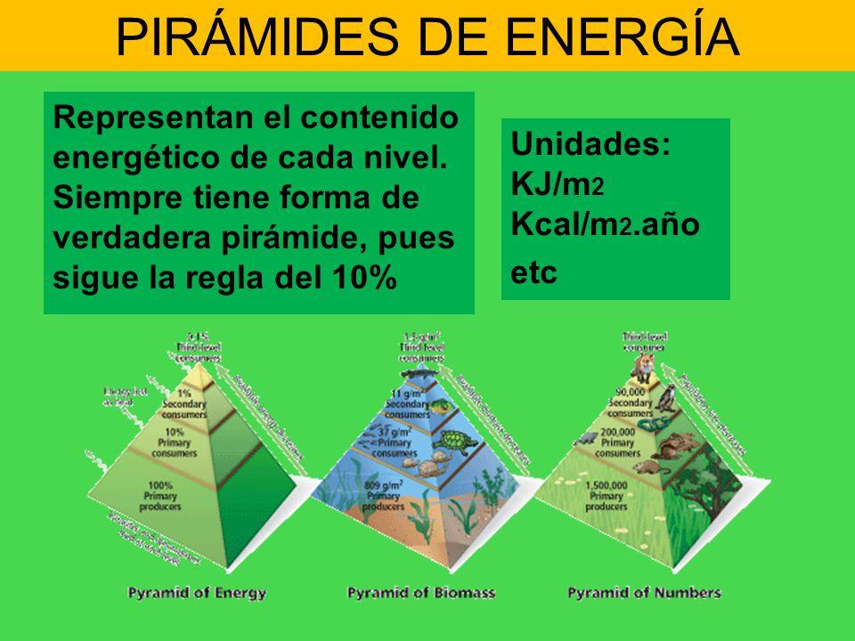PIRÁMIDES DE ENERGÍA Representan el contenido energético de cada nivel. Siempre tiene forma de verdadera pirámide, pues sigue la regla del 10% Unidade