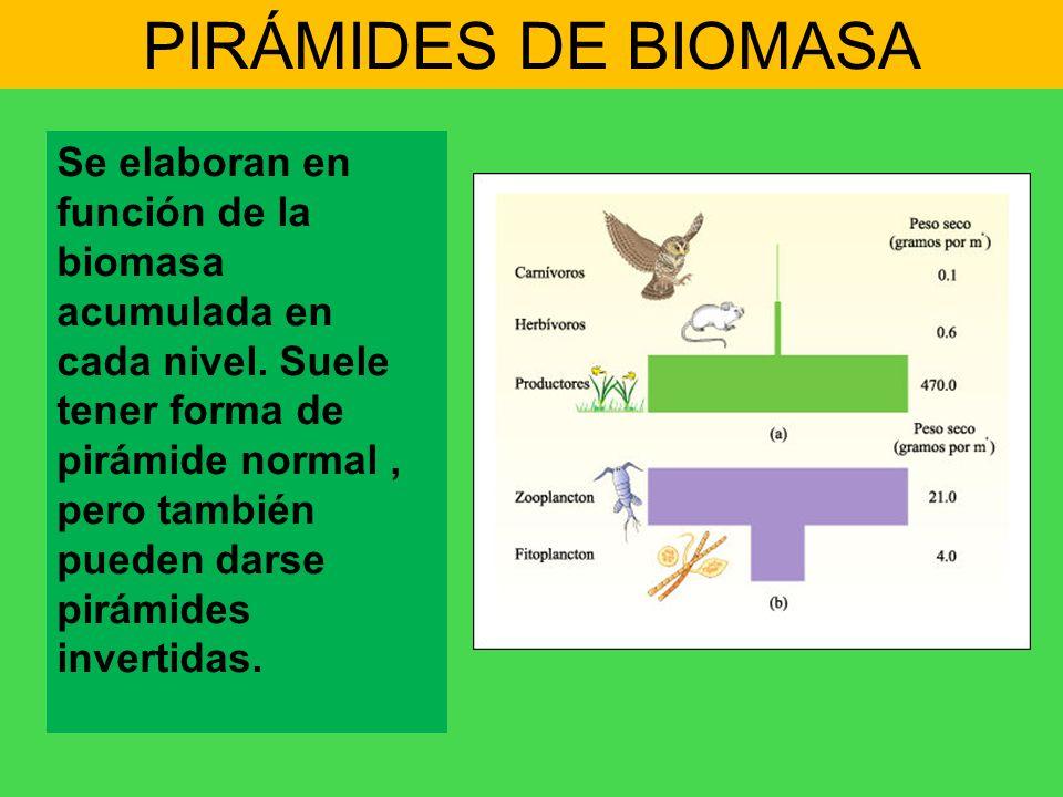 PIRÁMIDES DE BIOMASA Se elaboran en función de la biomasa acumulada en cada nivel. Suele tener forma de pirámide normal, pero también pueden darse pir