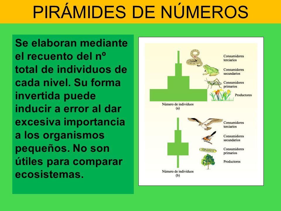 PIRÁMIDES DE NÚMEROS Se elaboran mediante el recuento del nº total de individuos de cada nivel. Su forma invertida puede inducir a error al dar excesi