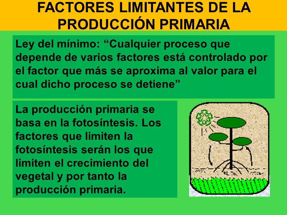 FACTORES LIMITANTES DE LA PRODUCCIÓN PRIMARIA Ley del mínimo: Cualquier proceso que depende de varios factores está controlado por el factor que más s
