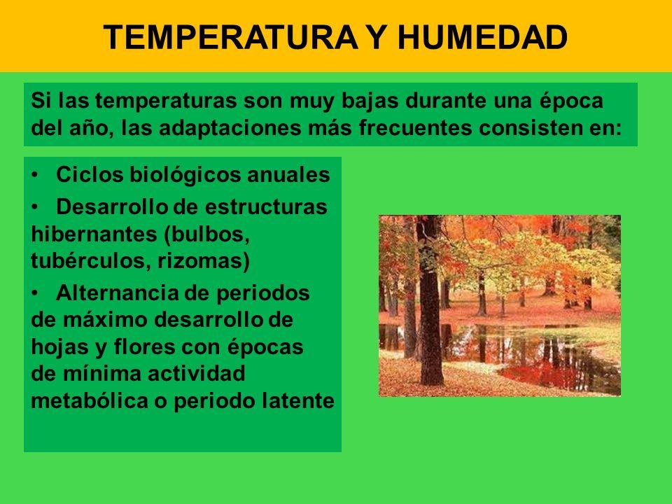 TEMPERATURA Y HUMEDAD Si las temperaturas son muy bajas durante una época del año, las adaptaciones más frecuentes consisten en: Ciclos biológicos anu