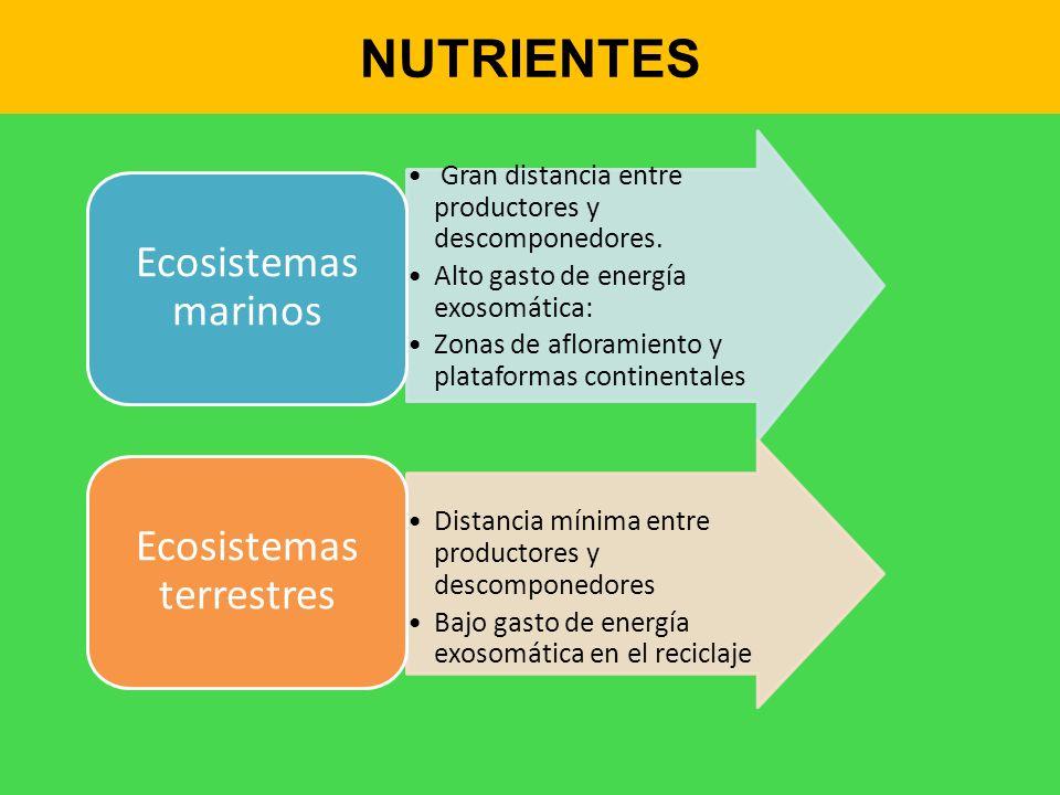 NUTRIENTES Gran distancia entre productores y descomponedores. Alto gasto de energía exosomática: Zonas de afloramiento y plataformas continentales Ec