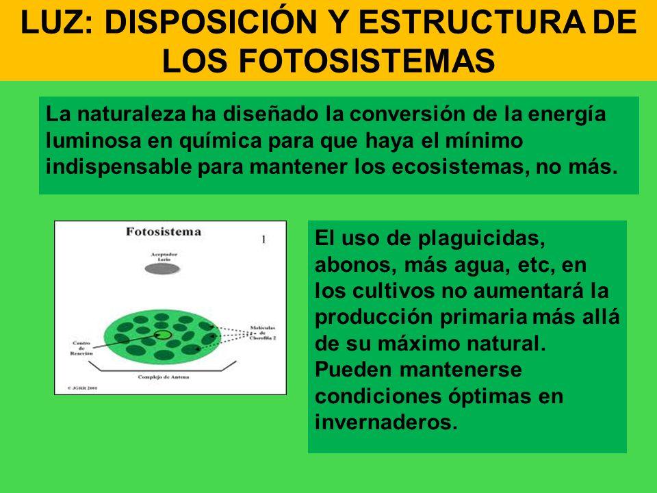 LUZ: DISPOSICIÓN Y ESTRUCTURA DE LOS FOTOSISTEMAS La naturaleza ha diseñado la conversión de la energía luminosa en química para que haya el mínimo in