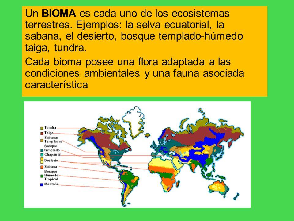 Un BIOMA es cada uno de los ecosistemas terrestres. Ejemplos: la selva ecuatorial, la sabana, el desierto, bosque templado-húmedo taiga, tundra. Cada