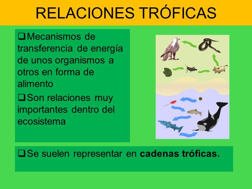 RELACIONES TRÓFICAS Mecanismos de transferencia de energía de unos organismos a otros en forma de alimento Son relaciones muy importantes dentro del e