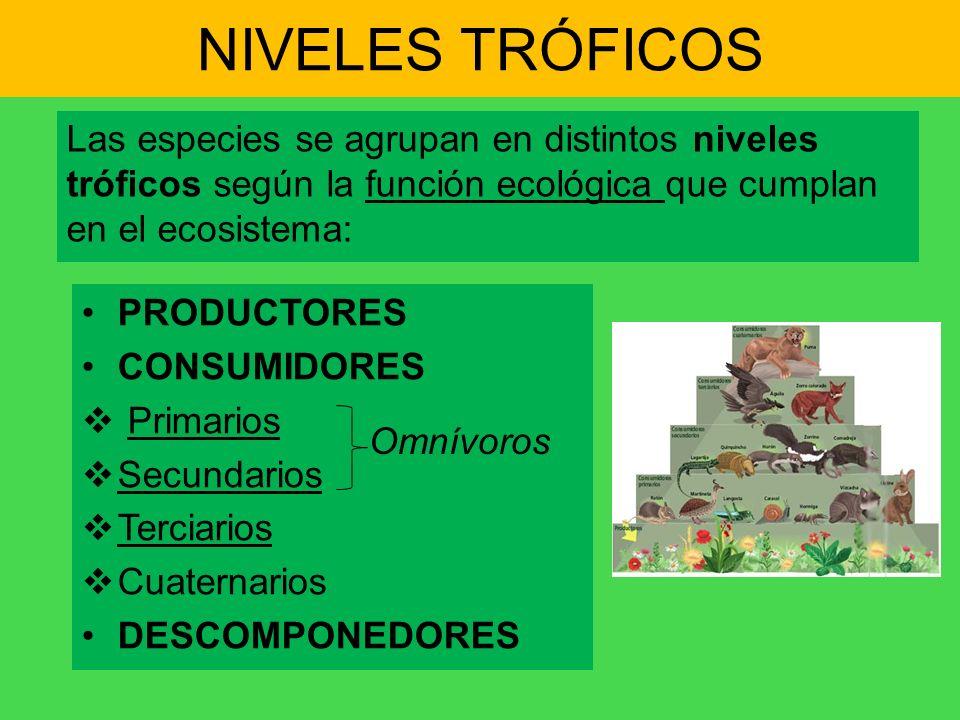 NIVELES TRÓFICOS Las especies se agrupan en distintos niveles tróficos según la función ecológica que cumplan en el ecosistema: PRODUCTORES CONSUMIDOR