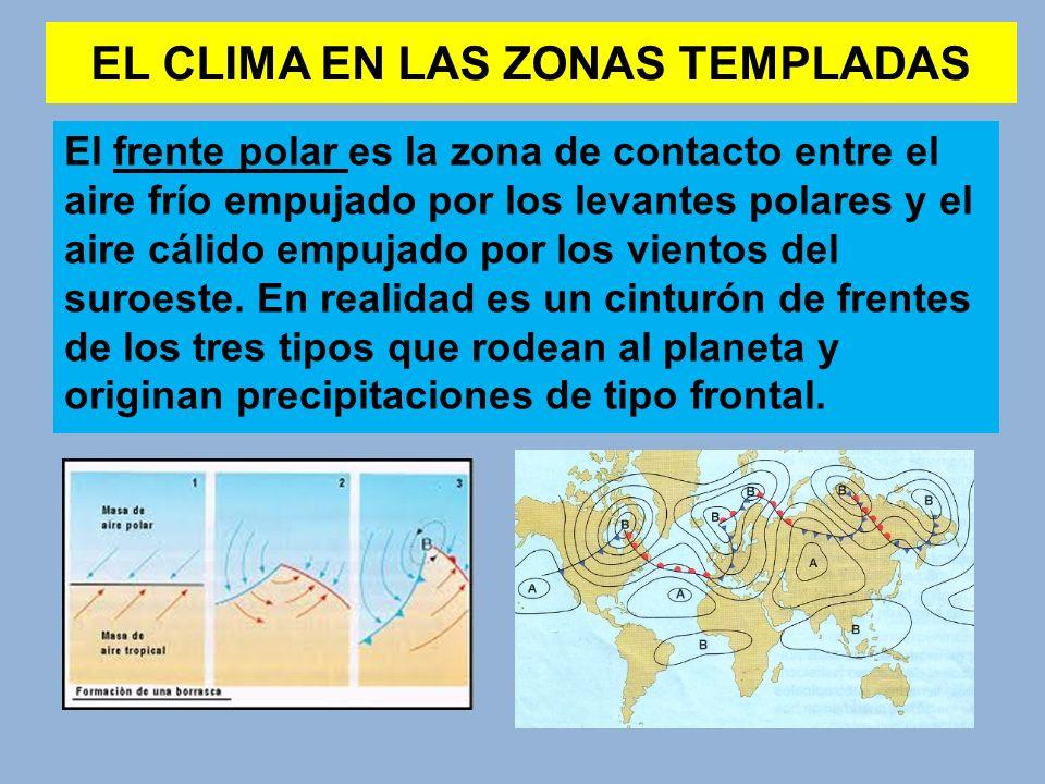 EL CLIMA EN LAS ZONAS TEMPLADAS El frente polar es la zona de contacto entre el aire frío empujado por los levantes polares y el aire cálido empujado