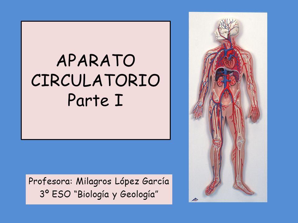 APARATO CIRCULATORIO Parte I Profesora: Milagros López García 3º ESO Biología y Geología