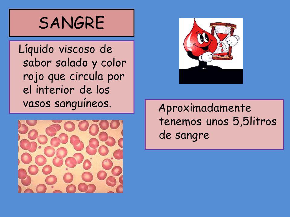 SANGRE Aproximadamente tenemos unos 5,5litros de sangre Líquido viscoso de sabor salado y color rojo que circula por el interior de los vasos sanguíne