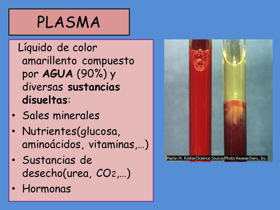 PLASMA Líquido de color amarillento compuesto por AGUA (90%) y diversas sustancias disueltas: Sales minerales Nutrientes(glucosa, aminoácidos, vitamin