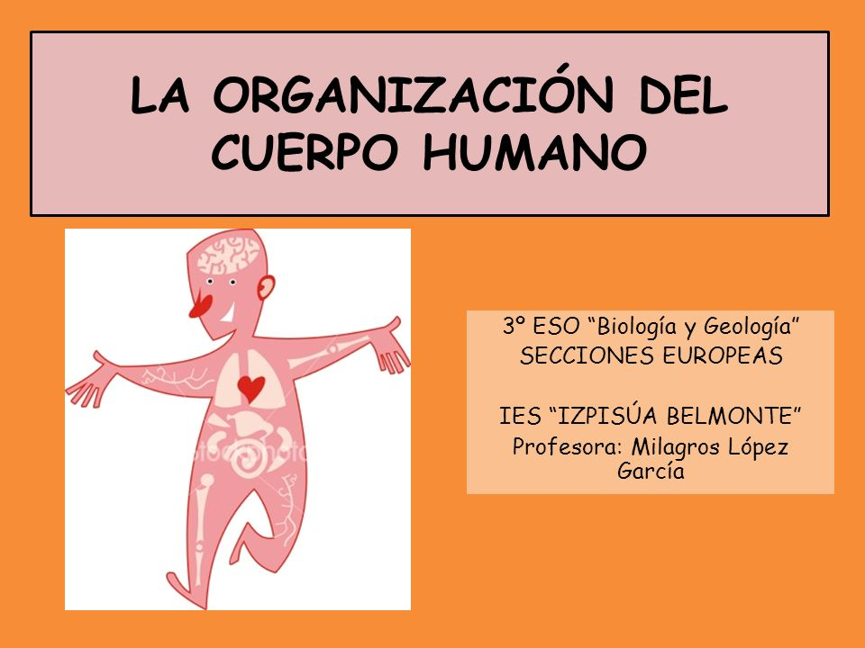 LEVELS OF ORGANIZATION IN HUMAN BODY Cells are the building blocks of all living organisms.