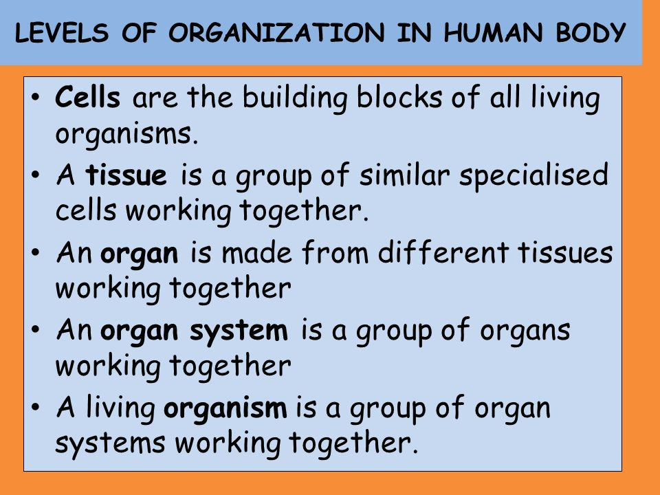 LEVELS OF ORGANIZATION IN HUMAN BODY Cells are the building blocks of all living organisms. A tissue is a group of similar specialised cells working t