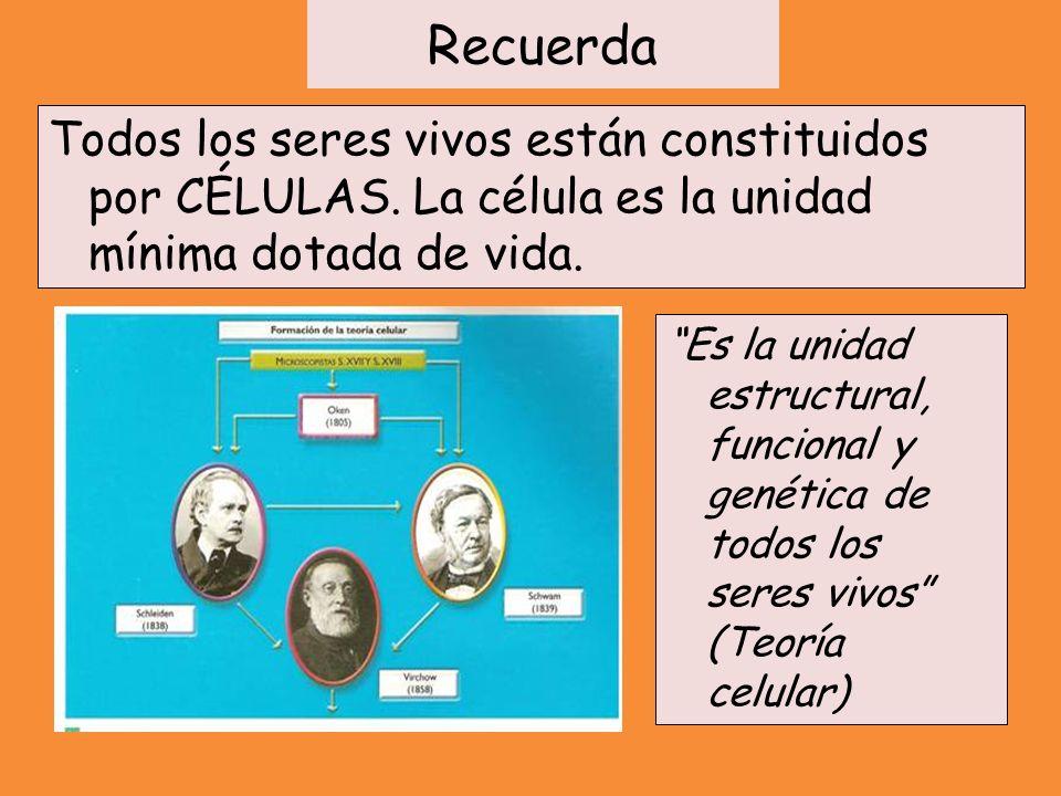 Recuerda Todos los seres vivos están constituidos por CÉLULAS. La célula es la unidad mínima dotada de vida. Es la unidad estructural, funcional y gen