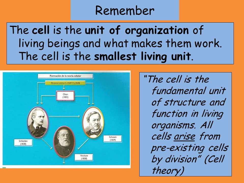 Remember The cell is the unit of organization of living beings and what makes them work. The cell is the smallest living unit. The cell is the fundame