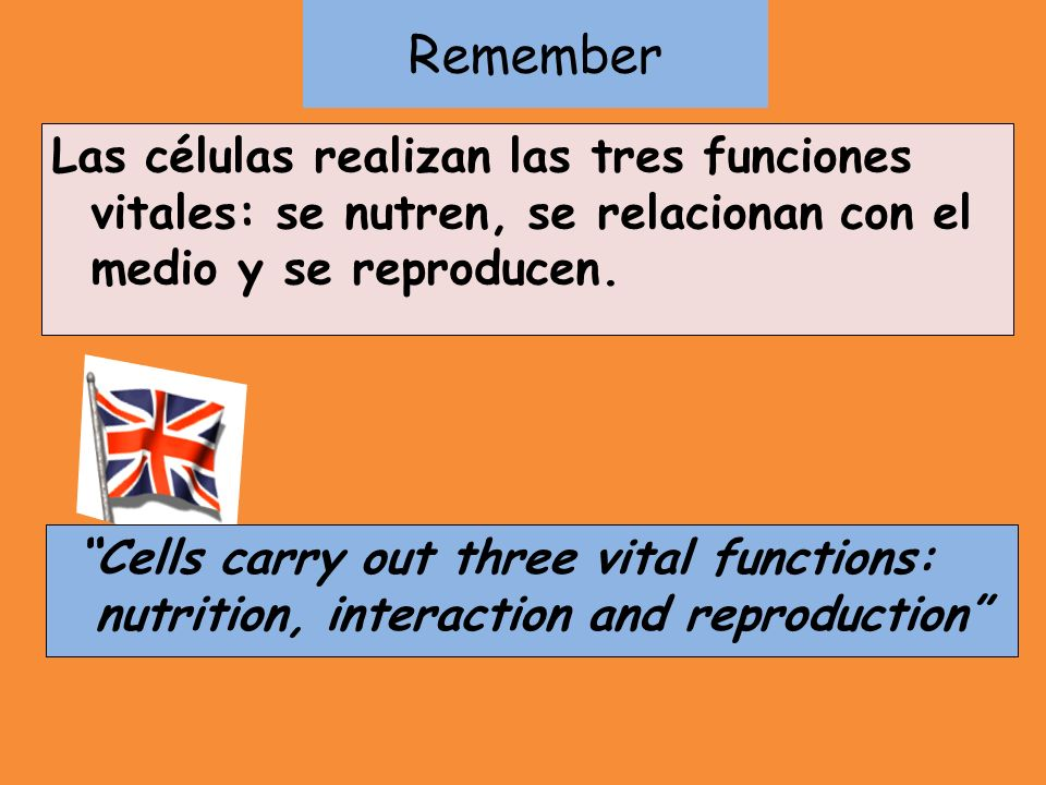 Remember Las células realizan las tres funciones vitales: se nutren, se relacionan con el medio y se reproducen. Cells carry out three vital functions