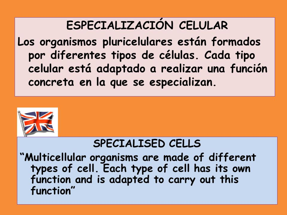 SPECIALISED CELLS Multicellular organisms are made of different types of cell. Each type of cell has its own function and is adapted to carry out this