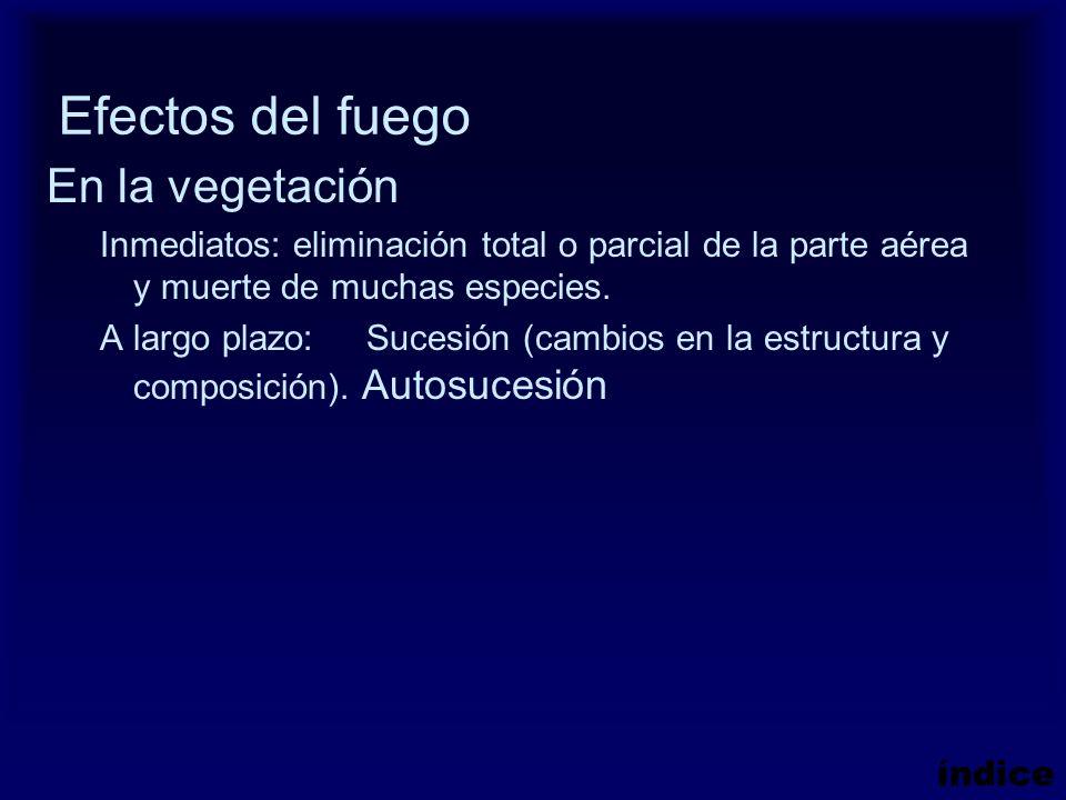 Efectos del fuego En la vegetación Inmediatos: eliminación total o parcial de la parte aérea y muerte de muchas especies. A largo plazo: Sucesión (cam