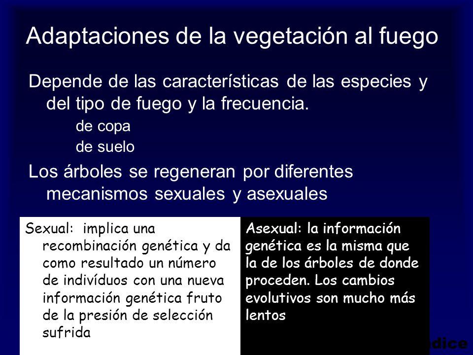 Adaptaciones de la vegetación al fuego Depende de las características de las especies y del tipo de fuego y la frecuencia. de copa de suelo Los árbole