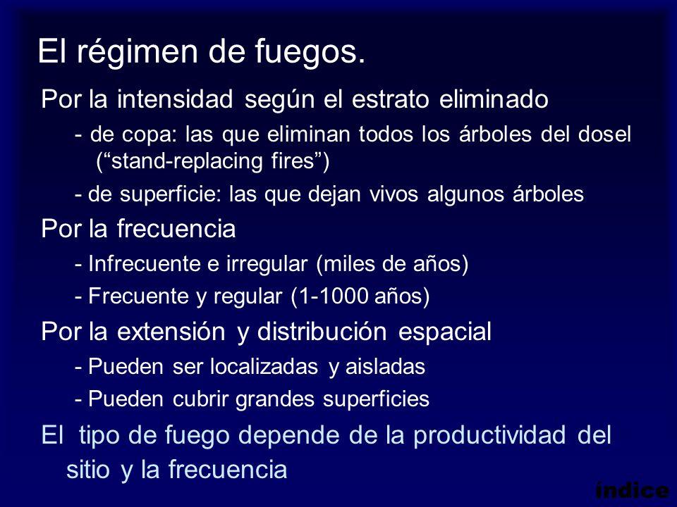 Efectos del fuego En la vegetación Inmediatos: eliminación total o parcial de la parte aérea y muerte de muchas especies.