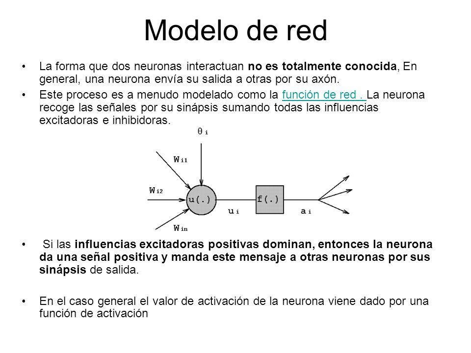 Modelo de red La forma que dos neuronas interactuan no es totalmente conocida, En general, una neurona envía su salida a otras por su axón. Este proce