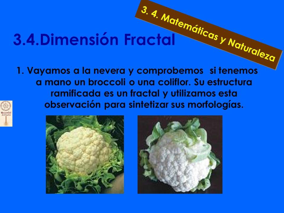 3.4.Dimensión Fractal La réplica la pondría Mandelbrot al contestar: