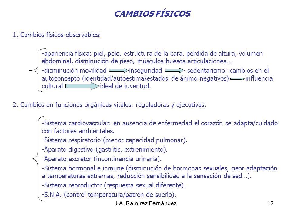 J.A. Ramírez Fernández12 CAMBIOS FÍSICOS 1. Cambios físicos observables: -apariencia física: piel, pelo, estructura de la cara, pérdida de altura, vol