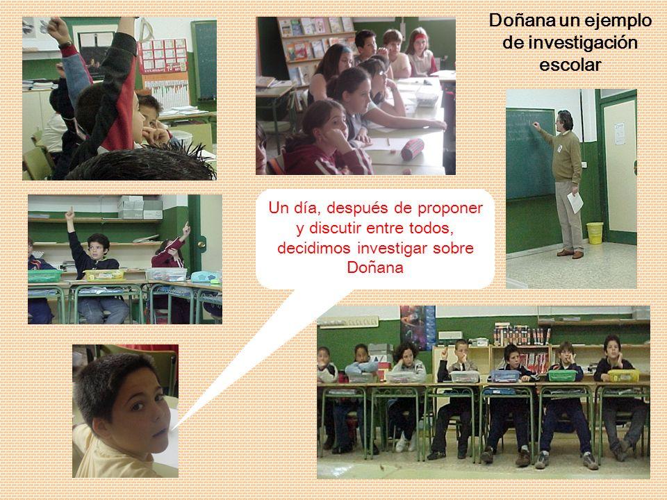Un día, después de proponer y discutir entre todos, decidimos investigar sobre Doñana Doñana un ejemplo de investigación escolar