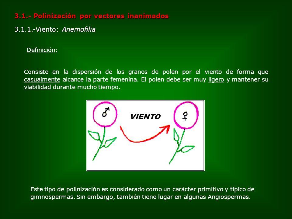 3.1.- Polinización por vectores inanimados 3.1.1.-Viento: Anemofilia Consiste en la dispersión de los granos de polen por el viento de forma que casua