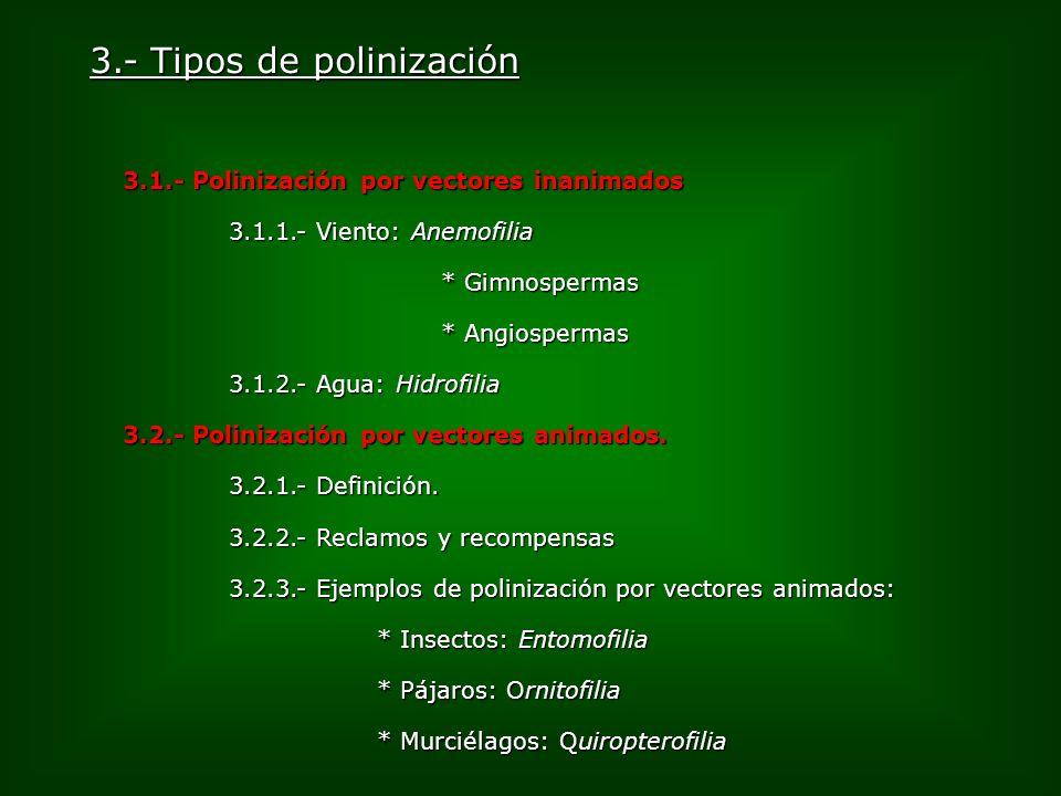 3.- Tipos de polinización 3.1.- Polinización por vectores inanimados 3.1.1.- Viento: Anemofilia * Gimnospermas * Angiospermas 3.1.2.- Agua: Hidrofilia