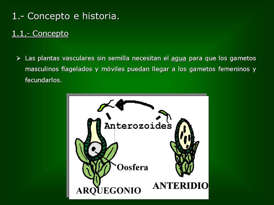 1.- Concepto e historia. Las plantas vasculares sin semilla necesitan el agua para que los gametos masculinos flagelados y móviles puedan llegar a los