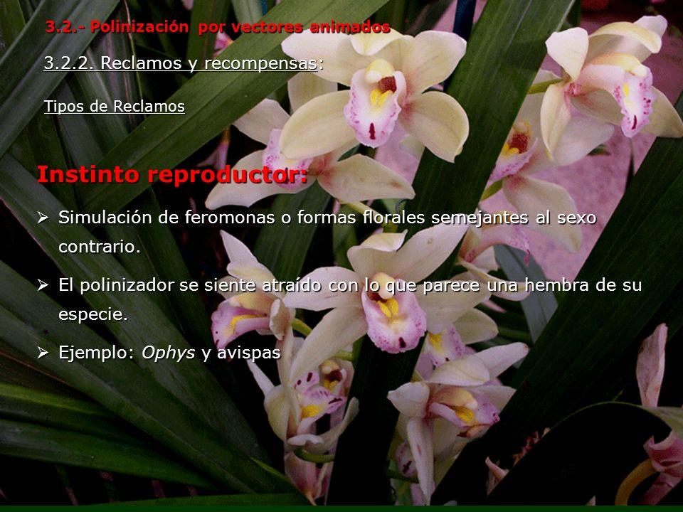Instinto reproductor: Simulación de feromonas o formas florales semejantes al sexo contrario. Simulación de feromonas o formas florales semejantes al
