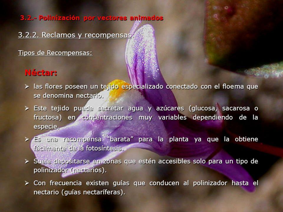 Néctar: las flores poseen un tejido especializado conectado con el floema que se denomina nectario. las flores poseen un tejido especializado conectad