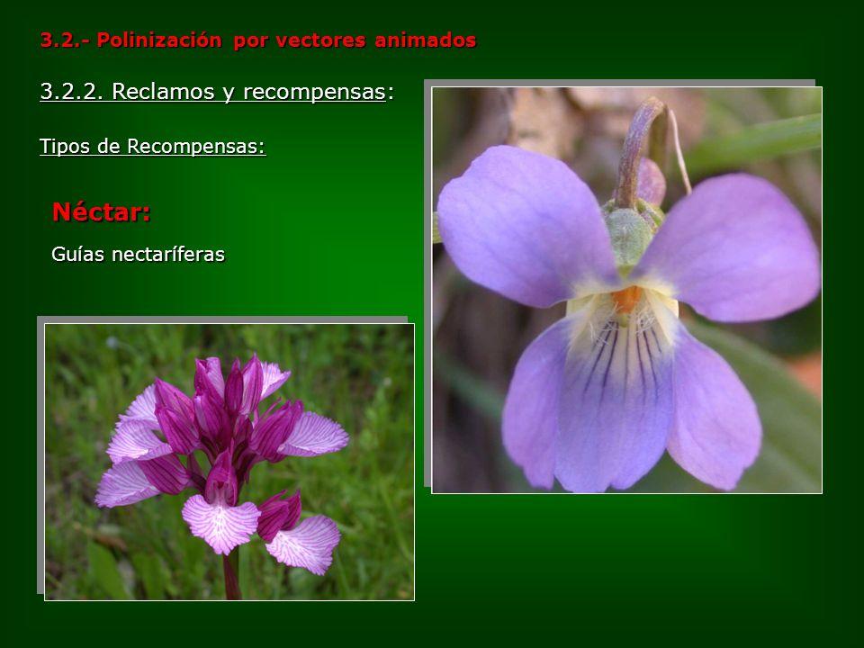 3.2.- Polinización por vectores animados Tipos de Recompensas: 3.2.2. Reclamos y recompensas: Néctar: Guías nectaríferas