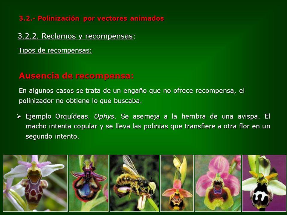 Ejemplo Orquídeas. Ophys. Se asemeja a la hembra de una avispa. El macho intenta copular y se lleva las polinias que transfiere a otra flor en un segu