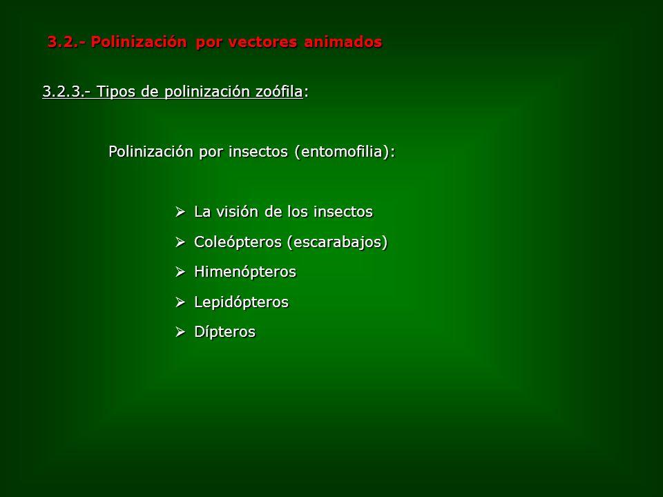 3.2.- Polinización por vectores animados 3.2.3.- Tipos de polinización zoófila: Polinización por insectos (entomofilia): La visión de los insectos La