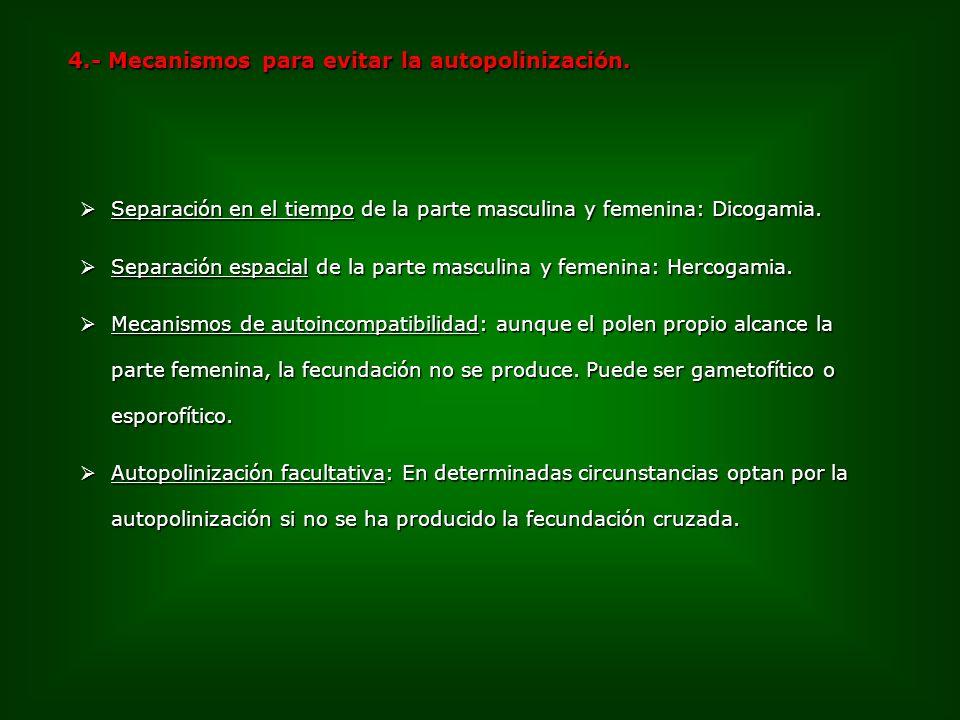 Separación en el tiempo de la parte masculina y femenina: Dicogamia. Separación en el tiempo de la parte masculina y femenina: Dicogamia. Separación e