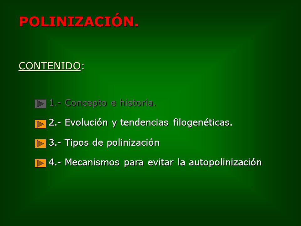 3.- Tipos de polinización 3.1.- Polinización por vectores inanimados 3.1.1.- Viento: Anemofilia * Gimnospermas * Angiospermas 3.1.2.- Agua: Hidrofilia 3.2.- Polinización por vectores animados.