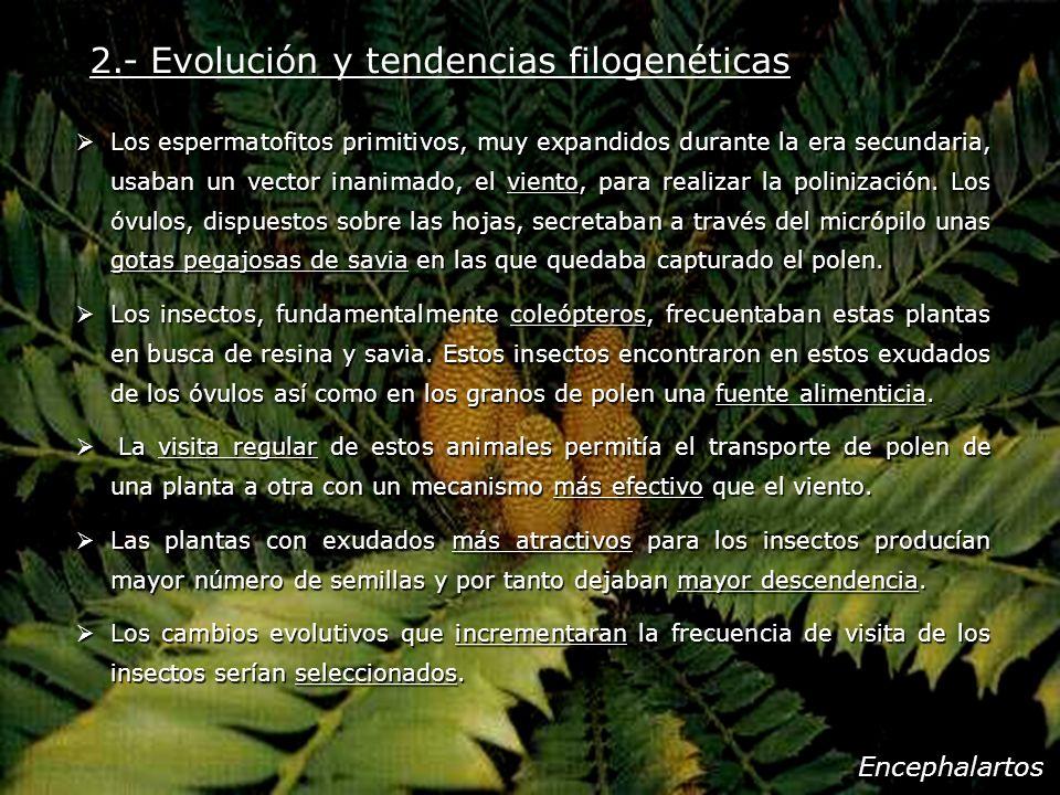 2.- Evolución y tendencias filogenéticas Los espermatofitos primitivos, muy expandidos durante la era secundaria, usaban un vector inanimado, el vient