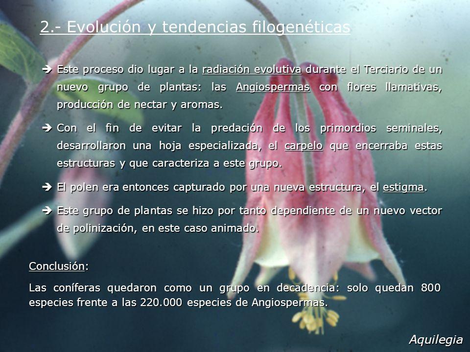 Este proceso dio lugar a la radiación evolutiva durante el Terciario de un nuevo grupo de plantas: las Angiospermas con flores llamativas, producción