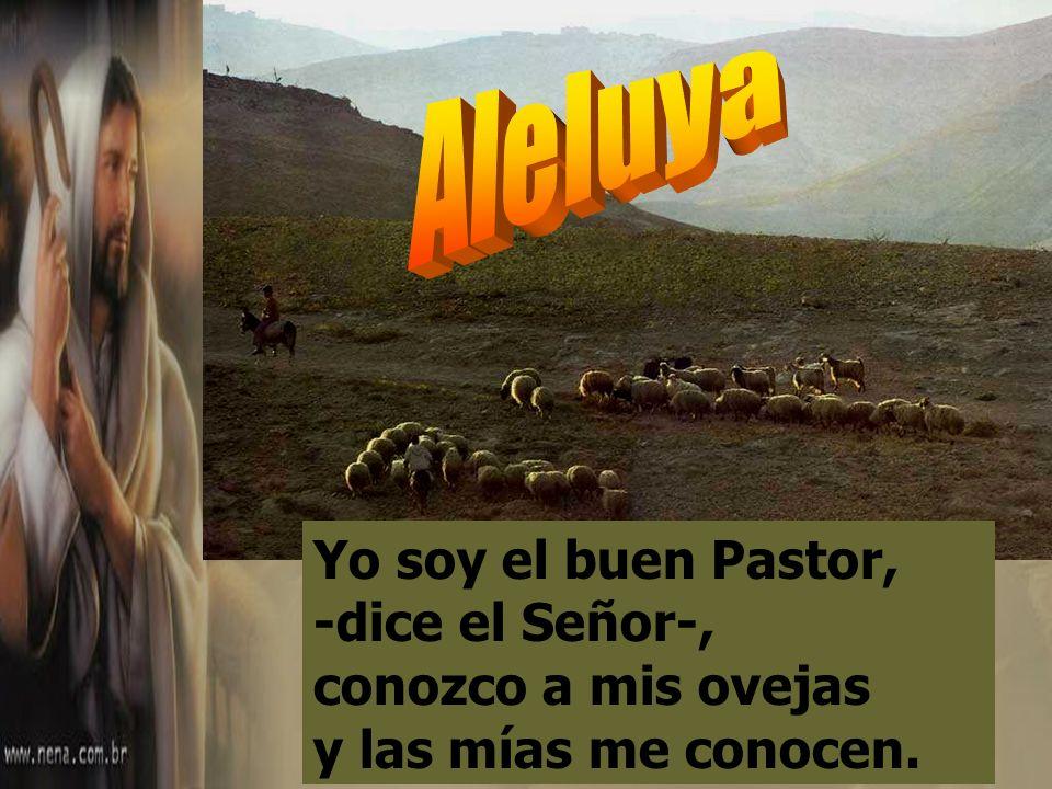 Tu bondad y tu misericordia me acompañan todos los días de mi vida, y habitaré en la casa del Señor por años sin término. El Señor es mi pastor, nada