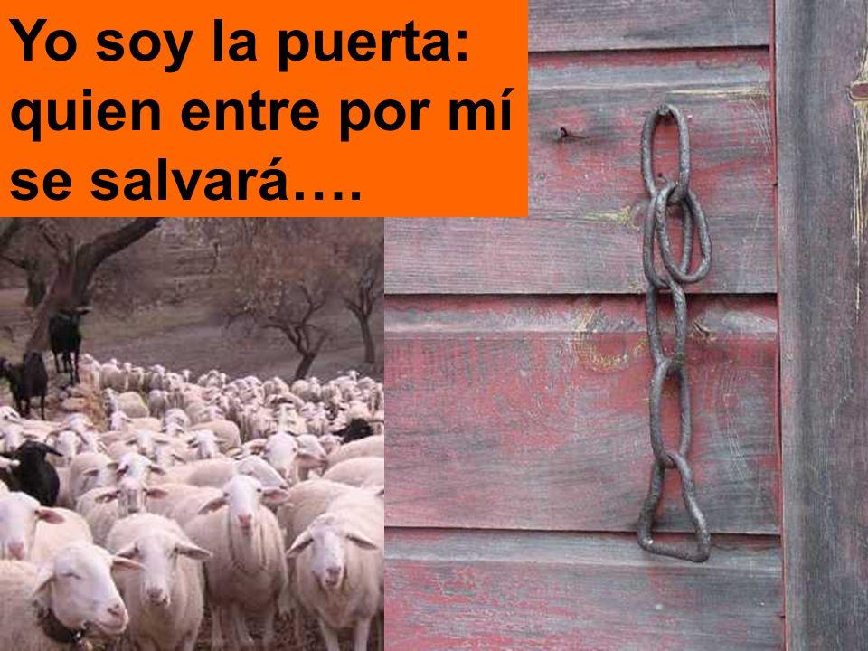 ... y las ovejas le siguen, porque conocen su voz.